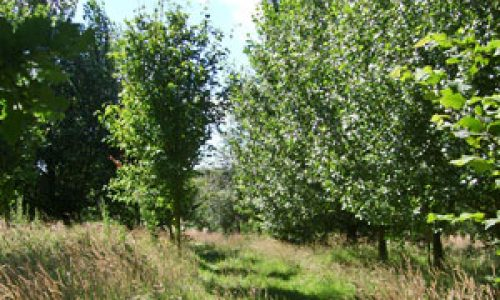 Woodland Natural Burial